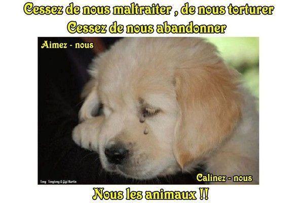 Contre la maltraitance animale